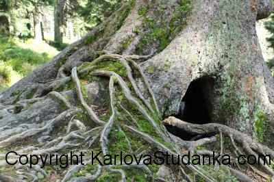 Výlet – z Barborky do Karlovy Studánky